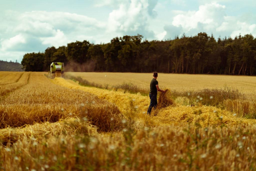 WD-DWK-Harvest-August-2019-WEB-2-1536x1025