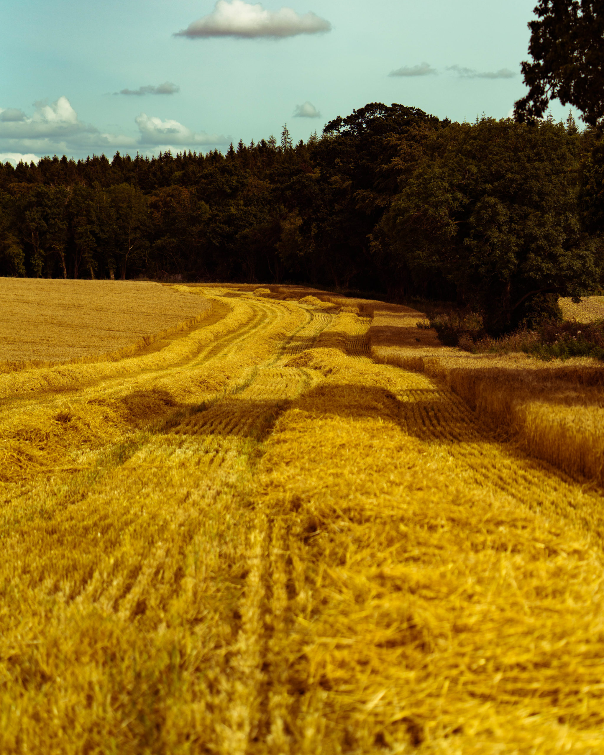 WD-DWK-Harvest-August-2019-WEB-54-scaled