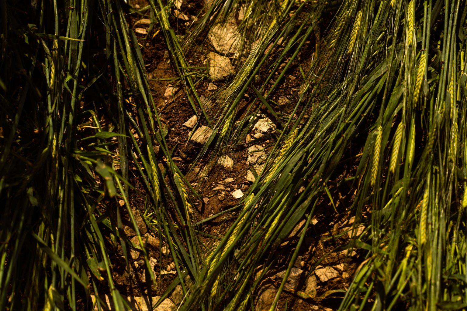 WD-Farm-Broomlands-Visit-1-Sample-2-1536x1025
