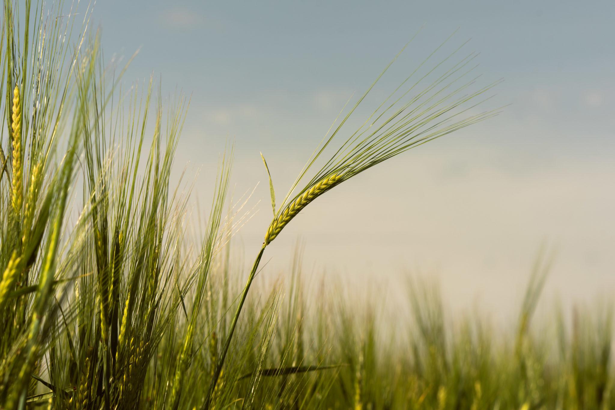 WD-Farm-Broomlands-Visit-1-Sample-4-2048x1366