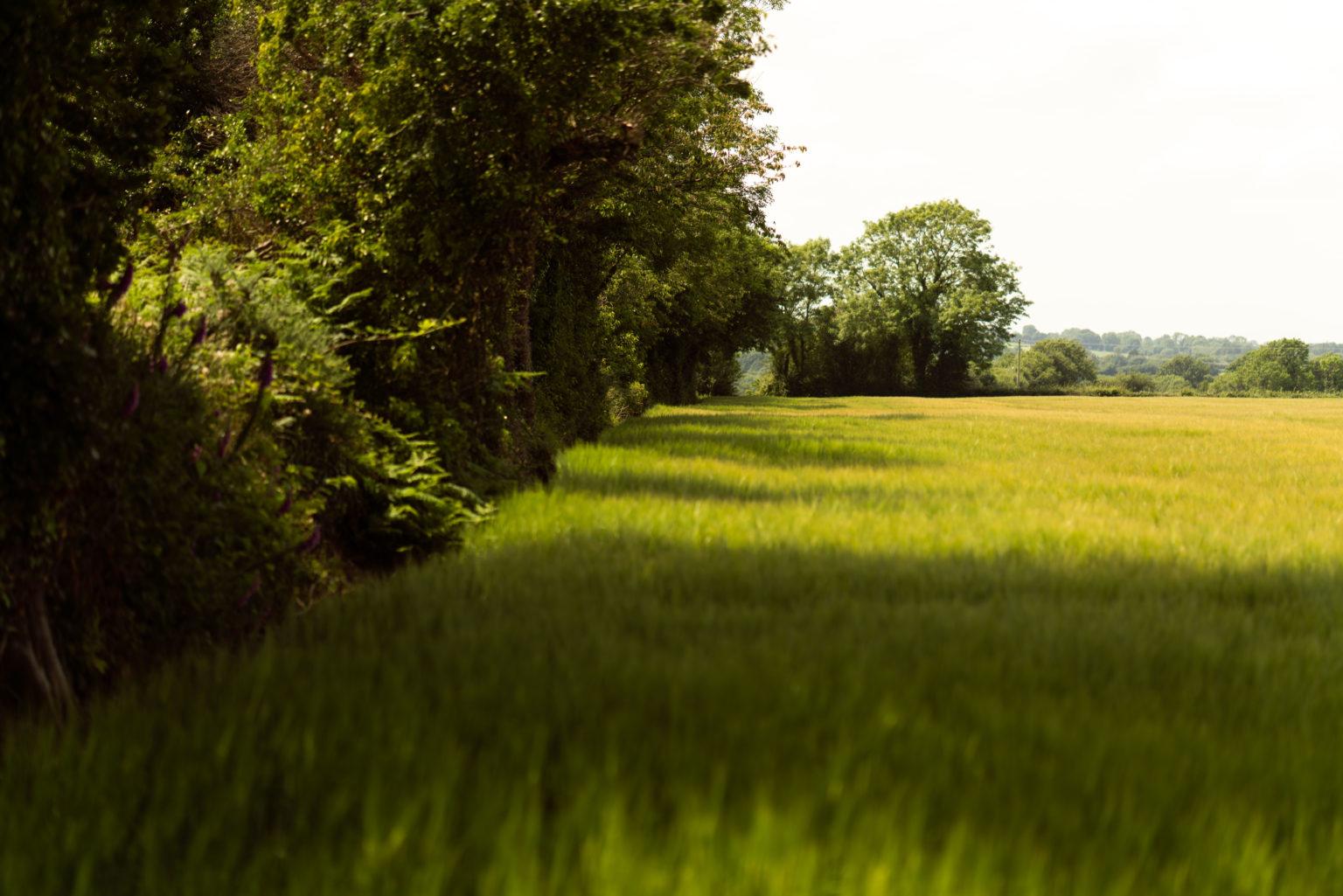 WD-Farm-Broomlands-Visit-1-Sample-6-1536x1025