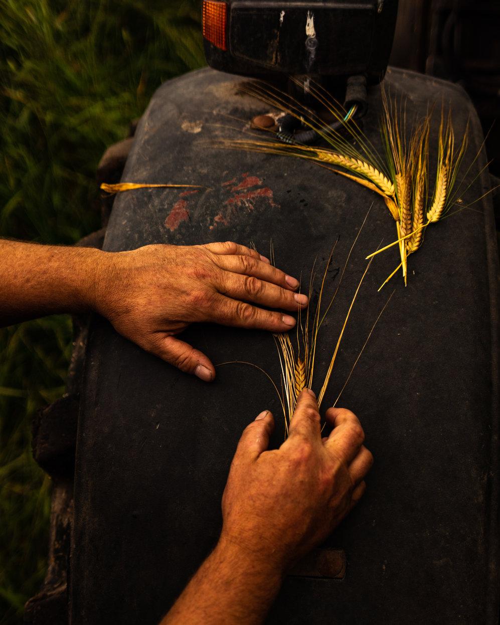 rsz_wd-seamus-duggan-midseason-harvest-web-29